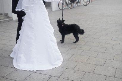 Ehepaar mit Hund reportage shooting vor augsburger standesamt
